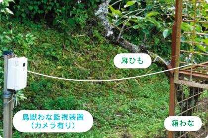 鳥獣わな装置の設置例